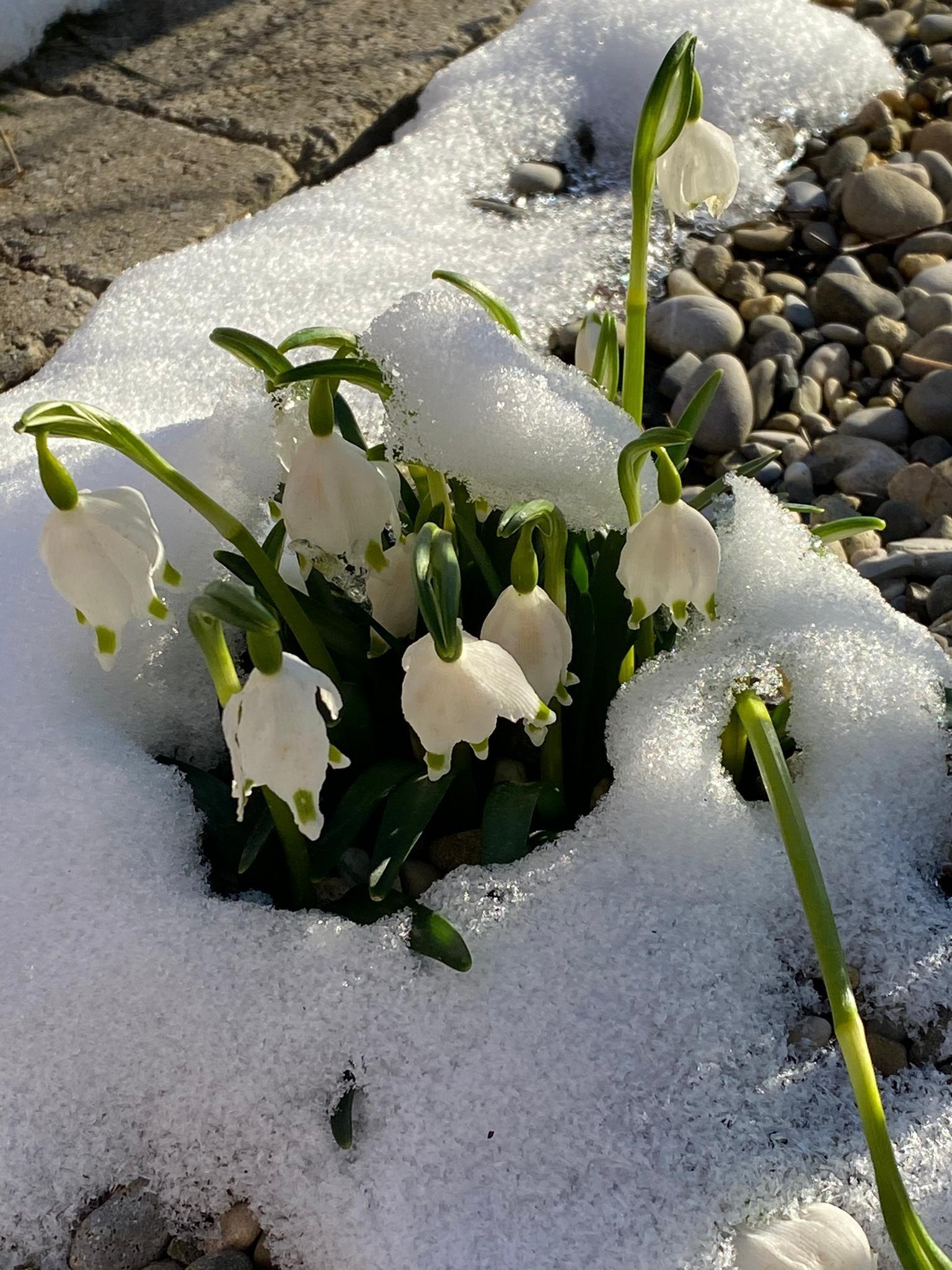 Farbiges und frohes Frühlingserwachen!